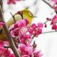 梅の香に癒される季節になりました!東京都の花名所&花見情報4選