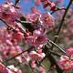 東北の春を告げる梅の花!仙台にある家族でおでかけ観梅スポット4選