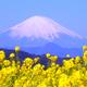 ドラマのロケ地で遊ぼう!菜の花が見ごろの吾妻山公園|神奈川二宮町