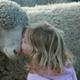 ふわふわ羊に癒されよう!のんびりできるこども動物園|東京・埼玉