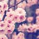 もうすぐ桜の季節!子連れで行きたいお花見でおなじみの東京の公園4選
