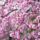 2月は梅の花が開花!千葉で乳幼児連れにもおすすめな観梅スポット4選