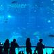 水族館、エプソン品川アクアスタジアム☆子供は興味シンシン。