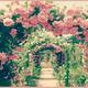 神代植物公園、春のバラフェスタ