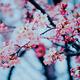 ひと足お先に!神奈川県の子連れでお花見をしたい桜の名所10選