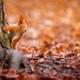 リスやかわいい動物に会える!都内のリス園&自然スポット3選
