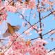 大阪のお花見名所10選|もうすぐ見頃!楽しいお祭りもおすすめ!