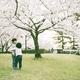【神奈川】お花見スポットにおすすめな桜の名所4選|2016年