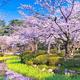 千葉でお花見と子どもも喜ぶ大きな広場のあるスポット4選!