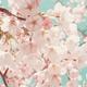 桜の見頃情報も!仙台のおすすめ花見スポット10選|宮城県