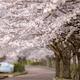 名古屋の花見名所4選!子連れで桜を見るならココがおすすめ!