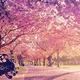 愛知県のおすすめ花見名所4選|もうすぐ見頃!お祭りも楽しい