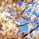 大阪でお花見といえばココ!家族で楽しめるお花見スポット3選!
