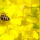 宮城の菜の花の名所3選|春到来!菜の花を見ながらお散歩しよう