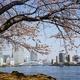 東京|隅田川&月島へお花見散歩へおでかけ|家族で桜を大満喫!
