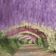 福岡の藤の花の名所4選|藤のトンネルの下はまさに別世界!