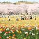 花の季節到来!関東の花畑4選|この春のおでかけにおすすめ