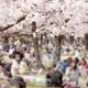 花見もバーベキューも楽しめる!大阪府山田池公園がおすすめ