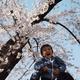 広島市植物公園で花見!季節の花が彩り豊かなさくらまつりが開催