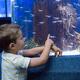 神奈川水族館8選|安い!無料!穴場施設も!子どもや赤ちゃん連れに人気