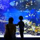 GWのおでかけにも!神奈川の定番アクアリウムといえば新江ノ島水族館
