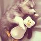 すみだ水族館にペンギンの赤ちゃんを見に行こう!