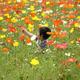 幻想的なイルミネーションと季節の花を見になばなの里へおでかけ|三重
