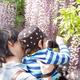 札幌も間もなく花の季節が到来!子連れにもおすすめ藤の花の名所3選