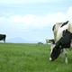 牛だけじゃない!ダチョウやヤギとも触れ合える千葉の人気牧場4選