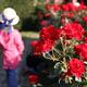 華麗に咲くバラが見頃!親子で楽しめる福岡のバラの名所3選