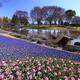 四季を感じる!子連れで楽しい、静岡県のおすすめ植物園 4選