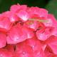 動物や絶景を楽しめる!見頃を迎えるあじさいの名所3選|福岡県