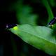 自然のホタルを見に行こう!静岡県のホタル観賞スポット3選