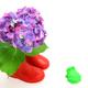 梅雨の頃が最盛期!神奈川の家族で行けるあじさいの名所イベント3選