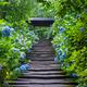 もうすぐ見ごろ!京都の風景とあじさい観賞を楽しめる名所4選