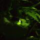 初夏の夜に幻想的に舞う!自然たっぷり蛍の鑑賞イベント3選|千葉県
