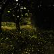 子どもと行きたい!自然に生息する蛍が見られる埼玉のスポット3選