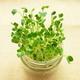 野菜の捨てる部分を活用!食育にもおすすめの親子で楽しめる野菜栽培