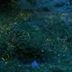 天然記念物や自然発生の蛍が観賞できる!長野県の人気スポット4選