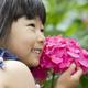 そろそろ見頃!雨に映える美しい「あじさい」の名所3選|新潟県