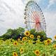 外遊びに最適!ひたち海浜公園のおすすめポイント|茨城