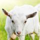のんびりと動物に触れ合える!子どもと行きたい愛知県の牧場4選