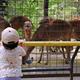 静岡県の人気動物園10選!かわいい動物に会いに行こう!