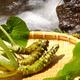 静岡は特産品の宝庫!静岡で収穫体験ができるおすすめスポット3選