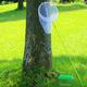 この夏は昆虫をじっくり観察してみよう!福岡の自然体験スポット3選