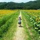 長野県にあるひまわり畑は地元の方にも人気!家族で訪れたい名所3選