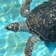 美ら海のことをもっと知りたい!沖縄県の水族館や海の体験施設3選