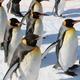 喜ばれること間違いなし!旭山動物園のお土産3選|北海道