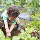 夏野菜など旬の味覚の収穫体験が楽しめる!おすすめ4選|近畿地方