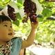 食欲の秋!フルーツ狩り&食べ放題ができるスポット4選|愛知県